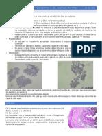 Clase 1 Digestivo Patologia 2017