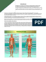 Sistema Muscular. lesiones arma blanca
