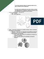 Los-cirrípedos-inter.docx