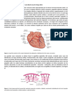 Circulación Coronaria (Isea)
