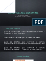 Morfofisiologia urogenital EF