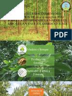 EFECTO DEL ESPACIAMIENTO EN PLANTACIÓN DE Acacia mangium (1).pptx