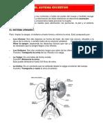 5º GRADO SESION Sistema-Excretor- (2).pdf