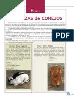 5401-razas-las-razas-de-conejos (1)