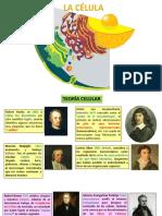 4. CÉLULA.pdf