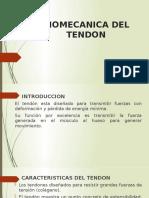 BIOMECANICA DEL TENDON erick