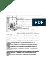 Caracterología Esquizoide