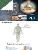 Transmission synaptique