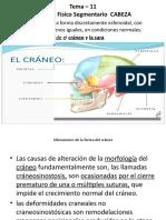Examen Físico Segmentario CABEZA