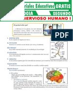 Sistema-Nervioso-Humano-para-Segundo-Grado-de-Secundaria