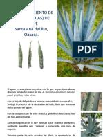 Manual Ixtle de Espadin.pptx