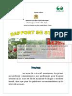 Rapport de ramboise - Copie.docx