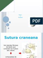 suturasyfontanelas-131204135811-phpapp01.pptx