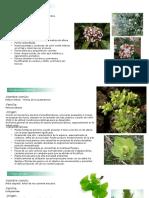 botanica.pptx