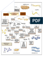 caracteristicas, funciones y reproducción del reino monera