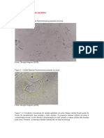 Atlas urinalise.docx