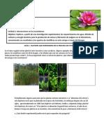 actividad fotosintesis 1