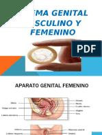 genital completo nuevo