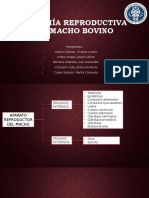 Anatomía Reproductiva del Macho.pptx