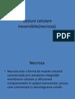 leziunele-celulare-ireversibilenecroza..pptx