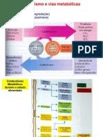 AMN-Metabolismo.pdf