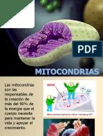Las_Mitocondrias_