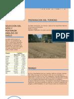 infografia cultivo seleccionado