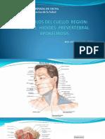 MUSCULOS DEL CUELLO  REGION.pdf
