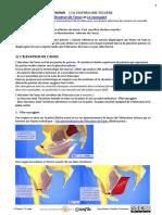 Elévateur de l'anus ( plancher pelvien féminin ou diaphragme pelvien)