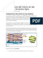 MOVIMEINTO DEL CALCIO.docx