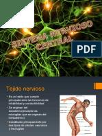 Sistema_nervioso.ppt