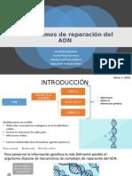 Mecanismos de reparación del ADN CORREGIDO