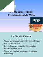 la-clula-1193242245512896-3.pdf
