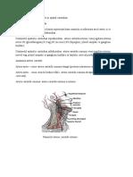 Leziuni vasculare si tumorale in spatiul carotidian