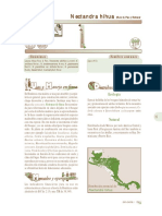 nectandra_hihua.pdf