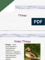 1345622365_klass-pticy.ppt