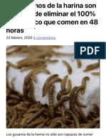 Los gusanos de la harina son capaces de eliminar el 100% del plástico que comen en 48 horas.pdf