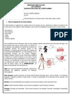Organización Cuerpo Humano (2)