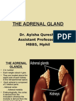 ADRENALS.ppt