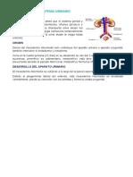 EMBRIOLOGIA DEL SISTEMA URINARIO resumenCOMPLETO