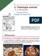gtp_t11.fisiologia_animal__movimiento__2016-18