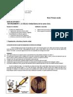 1º - Guía de estudio Célula.pdf