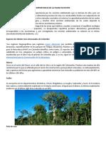 ESPECIES DE FLORA AMENAZADAS.pdf