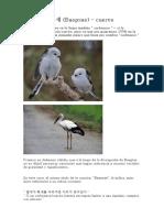 뱁새-Baepsae-cuervo