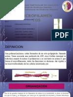 microfilamentos expo (1).pptx