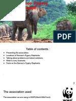 borneo elephant inc-2