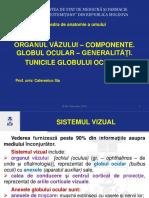 2. Glogul ocular. Tunicile G.O..pdf