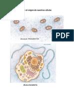 Primero 4 El origen de nuestras células