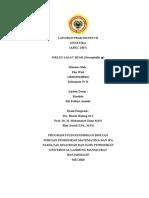 Eka wati_1810119120016_Laporan Praktikum VII Genetika_Siklus Hidup Lalat Buah .docx
