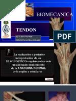 biomecanica del tendon . 1 pptx.pptx
